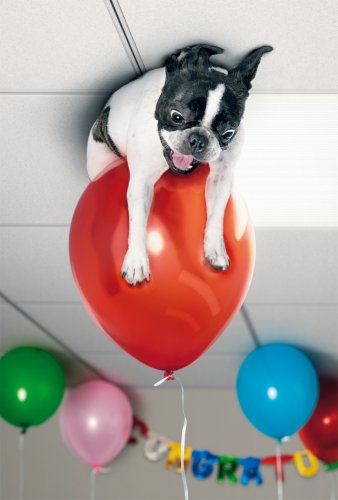 Avanti Karten - Humorkarte Geburtstagskarte Hund schwebt auf einem Luftballon 94-1047 (Geburtstagskarte Mit Hund)