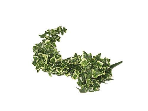 a-deko-lierre-busch-avec-258-feuilles