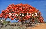 prime vista 20 stücke Goldene Mimose pflanzen Seltene Schöne Akazie Gelb Wattle Tree Pflanzen Hausgarten Blume pflanzen Edlen Bonsai Geschenk bonsai: 14