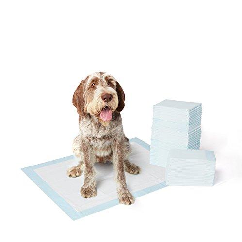 AmazonBasics Tapis d'apprentissage pour animaux domestiques , lot de 60, Format XL