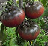 Tomate Black from Tula - - 20 semillas