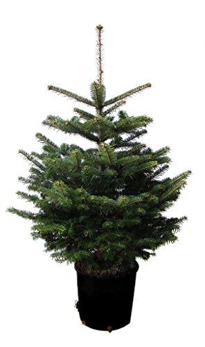 Weihnachtsbaumland Nordmann_parent_topf