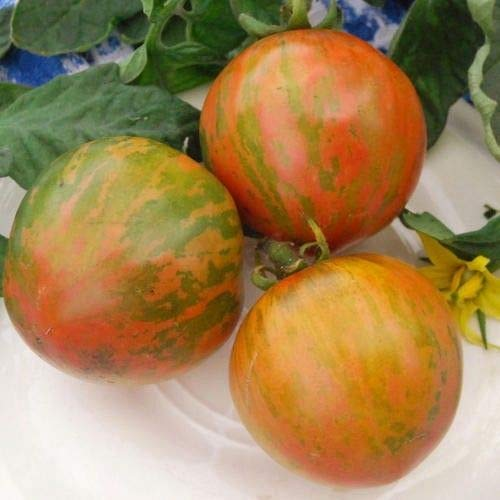 Portal Cool Gemüse - Tomate - Red Zebra - 50 Samen - Große