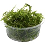 Bunnycart Java Moss(1 Box)