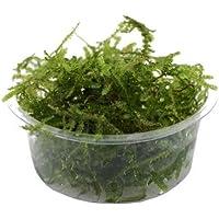 Bunnycart Java Moss(1 Box)