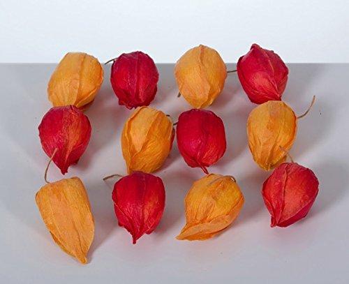 AMS 24 Stk Deko Physalis Deko Früchte Lampionfrüchte Orange Rot Kunstblumen Physalis Herbstdeko Herbst Lampions Früchte Streuteile