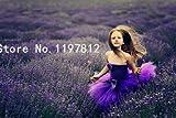 Pinkdose Förderung 200pcs / Bag Englisch Lavendel, Lavendel Tee Angustifolia, Importiertes Vanille einheimischer Arten, freies Verschiffen: Violette