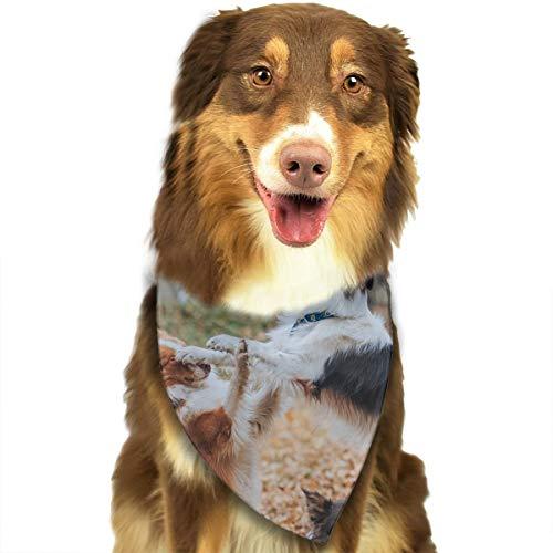 Dieceasy Halstuchtuch für Hunde und Katzen, Motiv: Border Collie Fights In The Fallen Leaves Leaf Border