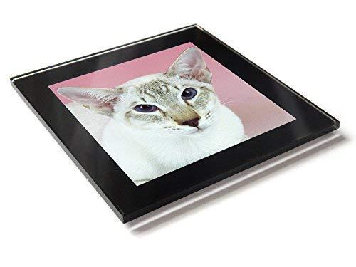 Siam Schokolade Tabby Katze Kätzchen Premium Glastisch Untersetzer mit Geschenkverpackung -