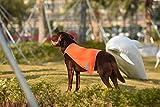 AYKRM Giubbotti di Sicurezza Cani Giallo Arancione Fluo (50, Arancione)