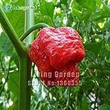 Vista 100 SEMI - 100% genuini semi freschi di semi di peperoncino freschi'Trinidad Moruga Scorpion' (peperoncino piccante) *