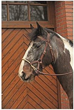 Bridon senza morso Marronee Cavallo Cavallo Cavallo   Up-to-date Stile    Vari I Tipi E Gli Stili    Moda E Pacchetti Interessanti    Nuovo design diverso  6fa479