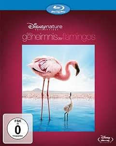 Das Geheimnis der Flamingos [Blu-ray]