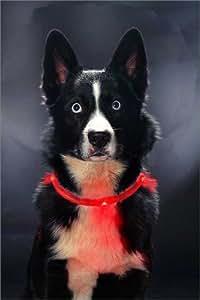 LEUCHTIE – 40 cm – rot – superheller Hunde-Leucht-Halsring