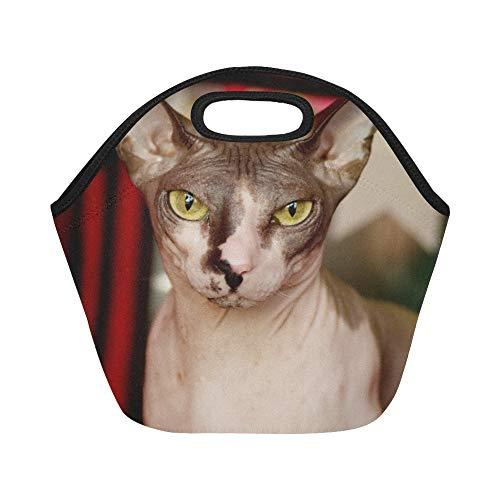 Isolierte Neopren-Lunchpaket Kanadische Sphynx-Katzen-Porträt-große wiederverwendbare thermische starke Mittagessen-Tragetaschen für Lunch-Boxen für im Freien arbeiten, Büro, Schule