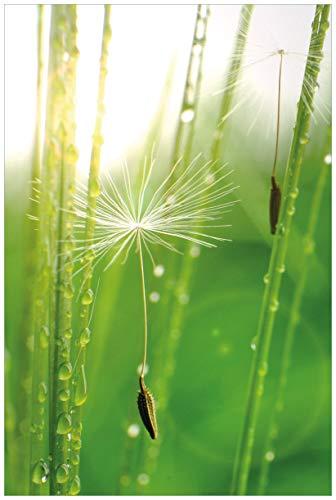 Wallario Acrylglasbild Pusteblume Nahaufnahme - 60 x 90 cm in Premium-Qualität: Brillante Farben, freischwebende Optik