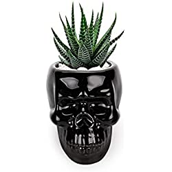 T4U (1 unidad) Para cactus, macetero pequeño para plantas suculentas, casa y jardín