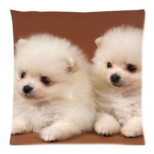 animal-white-dogs-cute-puppies-chow-chow-federe-con-cerniera-di-copertura-cuscino-di-457-x-457-cm