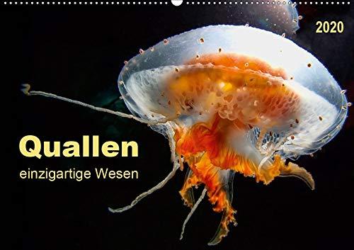 Quallen - einzigartige Wesen (Wandkalender 2020 DIN A2 quer)