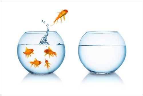 Póster 91 x 61 cm: Goldfish Jumping to Liberty rclassen