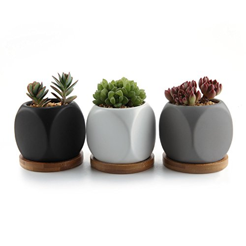 T4U 6.3CM Spielwürfel Design Sukkulenten Töpfe Kaktus Pflanze Töpfe Mini Blumentöpfe - 3 Farben Set, mit Bambus-Untersetzer Mini-topf-set