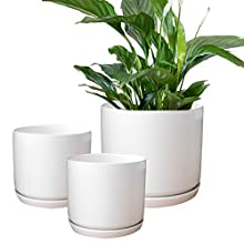 Olly & Rose White Plant Pots Ceramic Garden Planters Set 3 with Saucers Indoor outdoor matt white flower pots round
