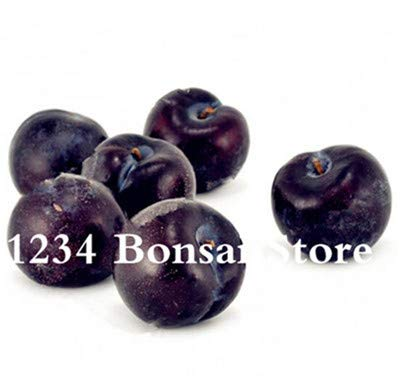 Bloom Green Co. Haute qualité 20 pcs Rare Noir Brin prune Bonsai fruit délicieux douce bio arbre & quot; krim noir & quot; Légumes et fruits Plante en pot: 4