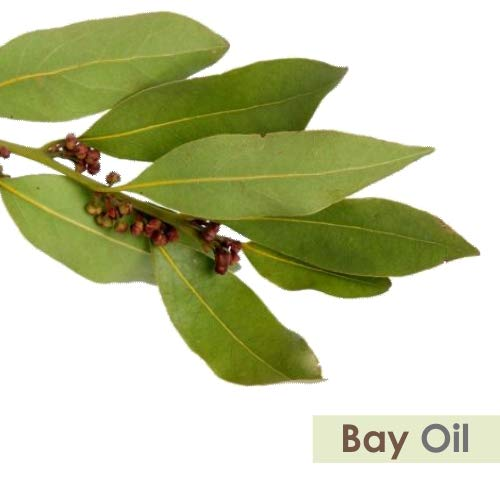 Bay Laurel Leaf (Laurus nobilis) Essential Oil 1000ml/33.8fl oz Express Shipping