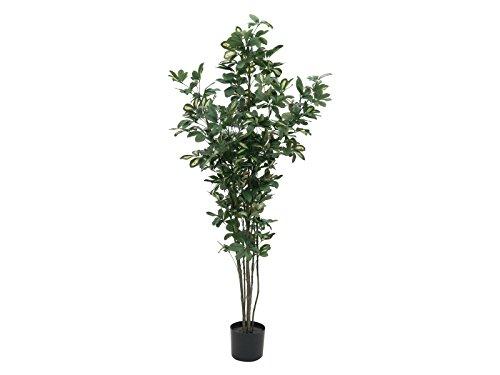 Unbekannt Schefflera, 150cm, Kunstpflanze