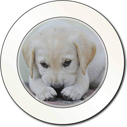 Advanta - Tax Disc Holders Creme Labrador-Welpen AutovignetteGenehmigungsinhaber Geschenk -