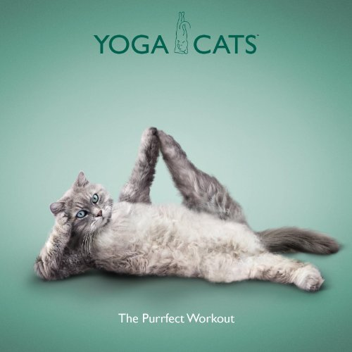 Yoga Cats - The Purrfect Workout