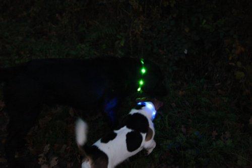 LumiVision Akku Leuchthalsband 40 cm Wiederaufladbares, wasserdichtes LED Leuchthalsband für Hunde blau - 2