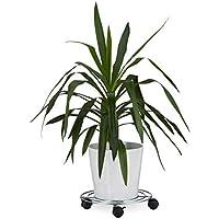 Platillos para plantas | Amazon.es