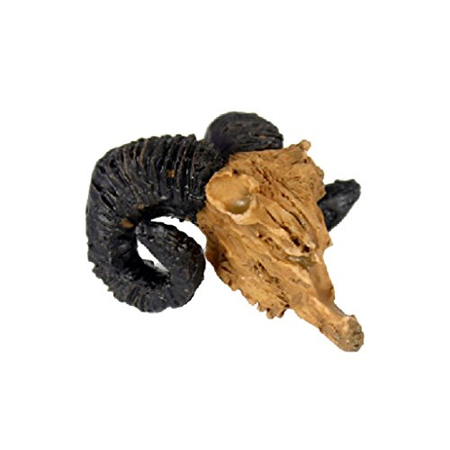 Reptile Vivarium Décoration Terrarium Aménagement Paysager Crâne Chèvre Résine