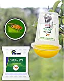 Fruit Fly Traps Review and Comparison