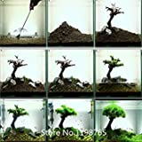 2016 Hot Hot 100pcs Aquarium Grassamen (mix) Wasser Wasserpflanzensamen (15 Arten) Familie pflegeleichte Pflanze gras Verkauf