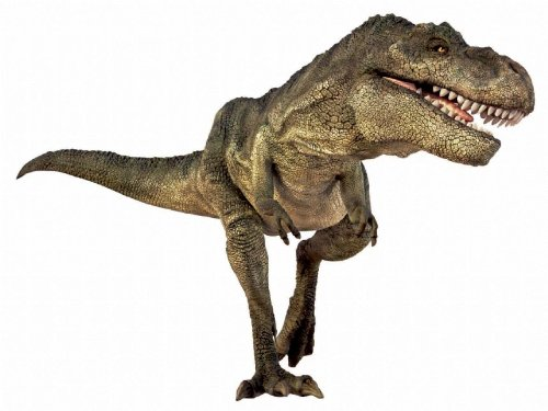 Image of Kids Play Natural History Educational Toy Museum Dinosaur Torch & Wall Projector