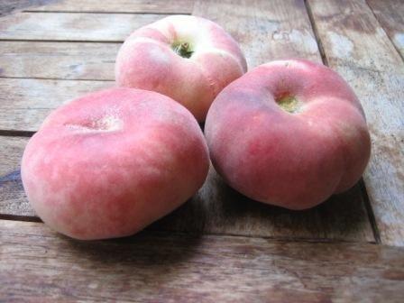 Teller- / Sandwichpfirsich, platt-runde Frucht, Buschbaum, 60-80cm, großer Topfballen