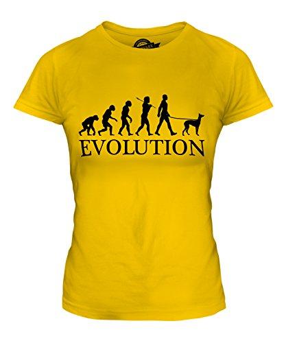 Italian Greyhound Evolution des Menschen - Damen anliegendes T-Shirt Top - Karamellbonbon, Damen, EU 40 M