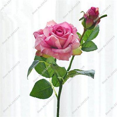Exotique Miniature Bonsai Fleur Rose Rosas Graine Bricolage jardin et maison embellissant de purification d'air 110 Pcs/Sac 9