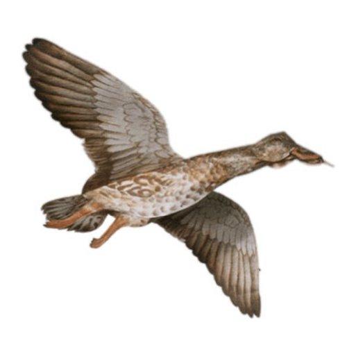 Jackite Mallard Hen Bird Kite  Duck  Fully Assembled  Caravan And Motorhome  Use  For Telescopic Flag Poles