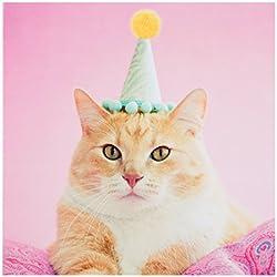 Hallmark-Tarjeta de felicitación en blanco Tarjeta de cumpleaños gato '-Medium