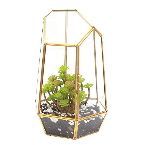 The Fellie Glas-Pflanzkasten Glas Pflanzen Terrarien Box, Blumentopf(12 x 12 x 19 cm) Gold