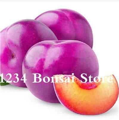 Bloom Green Co. Haute qualité 20 pcs Rare Noir Brin prune Bonsai fruit délicieux douce bio arbre & quot; krim noir & quot; Légumes et fruits Plante en pot: 14