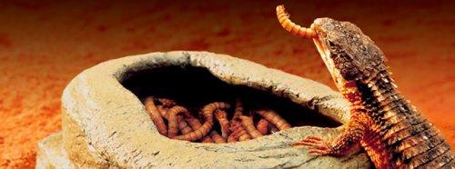 Exo Terra Buffalo Worm Feeder 4