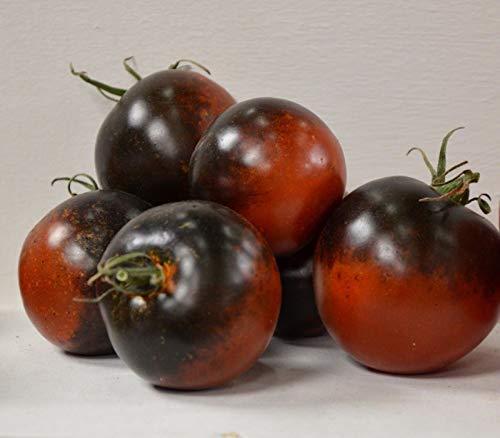 Portal Cool Indgio Blau Schokoladen-Tomate sät freies Verschiffen Blau Schwarz