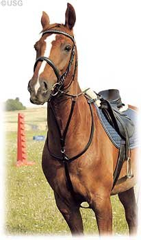 usg-flat-hunting-breast-plate-with-martingale-fork-silver-fittings-saddlepart-with-snapples-pony