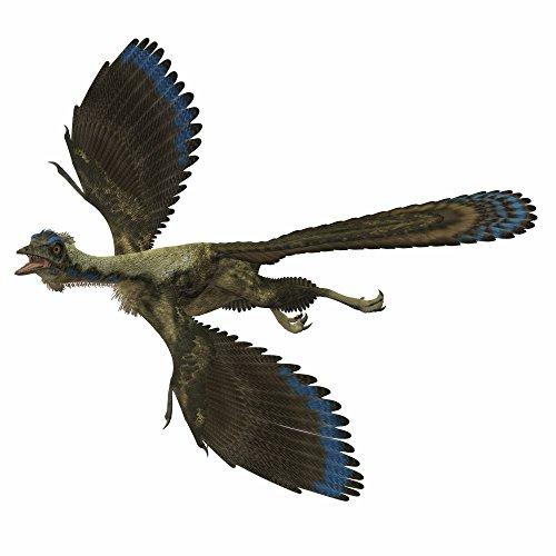 Corey Ford/Stocktrek Images – Archaeopteryx prehistoric bird. Photo Print (72,14 x 72,14 cm)
