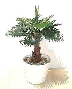 Zwerg-Palme, Kunstpflanze (33cm) ohne Topf: Amazon.de: Garten