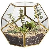 Latón de cobre de oro de mesa terrario de cristal geométrico Pentágono abierto forma de bola Helechos y musgo plantas suculentas maceta caja 17,5x 17,5x 15cm regalo de Navidad